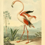 Poster flamingo | Yay