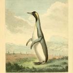 Poster Pinguïn | Yay