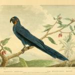 Poster Papagaai | Yay