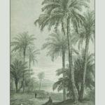 Poster Palmbomen | Yay