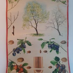 vintage schoolplaat pruimenboom1